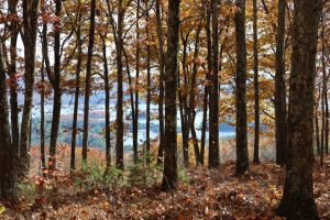 Image of trees in the foreground with a fall scene mountain range in the background through the thicket of the trees